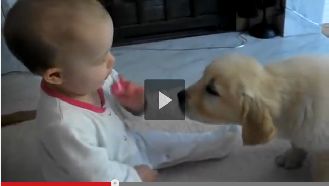 Labrador Puppy and Baby