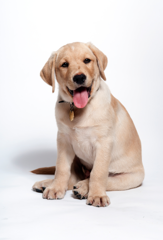 Find out how puppies learn so that you can teach your puppy.