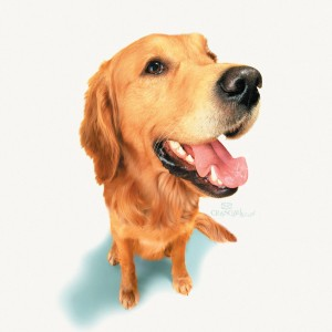 Golden Retrievers are prone to certain genetic health problems.