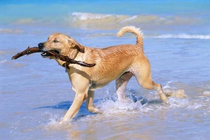 Changes in your dog's life can result in separation anxiety.