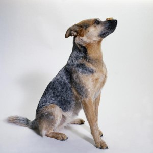 Labraheelers have an average lifespan of 14 years.
